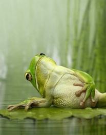 La rana que queria ser aunténtica